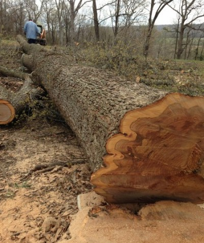 tree being cut up