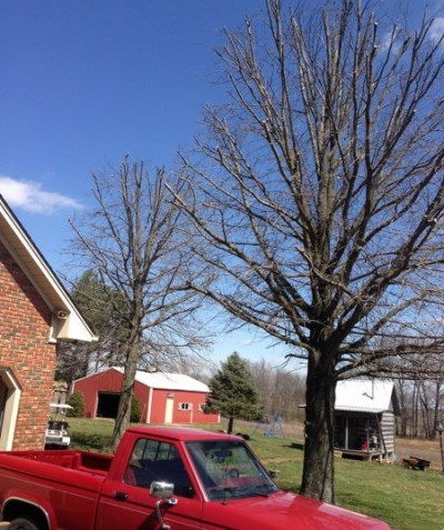 Tree Trimming Services in Bowling Green KY