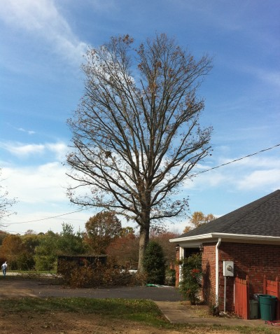 Tree Trimming and Pruning Bowling Green