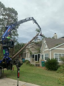 Tree services using crane to remove tree